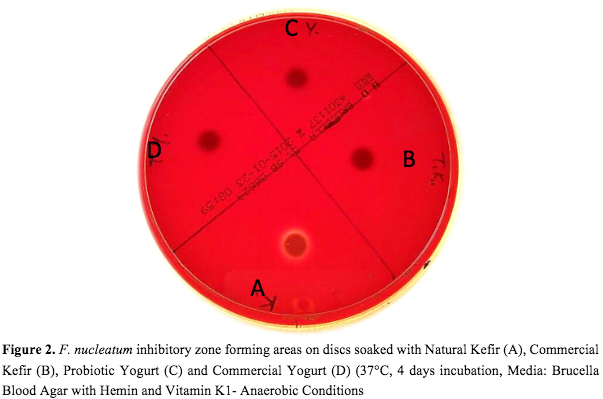 Inhibition of F. nucleatum by natural kefir, probiotic yogurt, commercial yogurt and commercial kefir samples